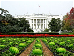 racist white house watermelon image